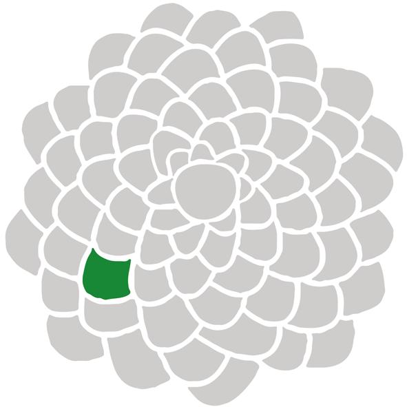 Stilisierter Querschnitt eines grauen Tannenzapfens mit einer einzelnen grünen Schuppe