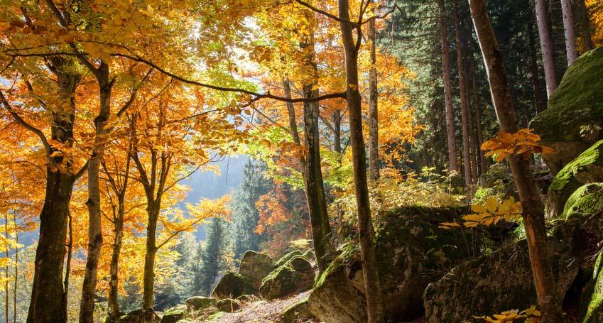 Herbstlicher Wald mit großen, moosbewachsenen Felsen